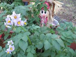 Art: Potatoe Plant by Artist Diane Funderburg Deam