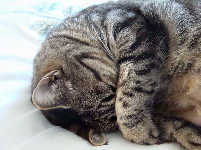 Art: Cat Nap by Artist Leea Baltes