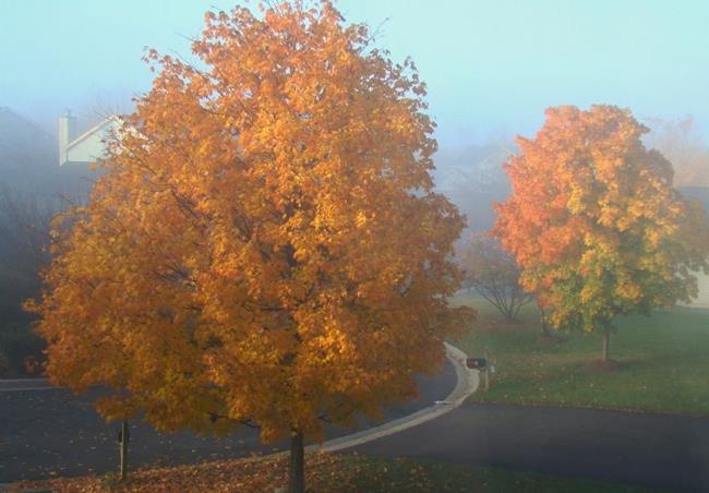 Art: Autumn Mist by Artist Leea Baltes