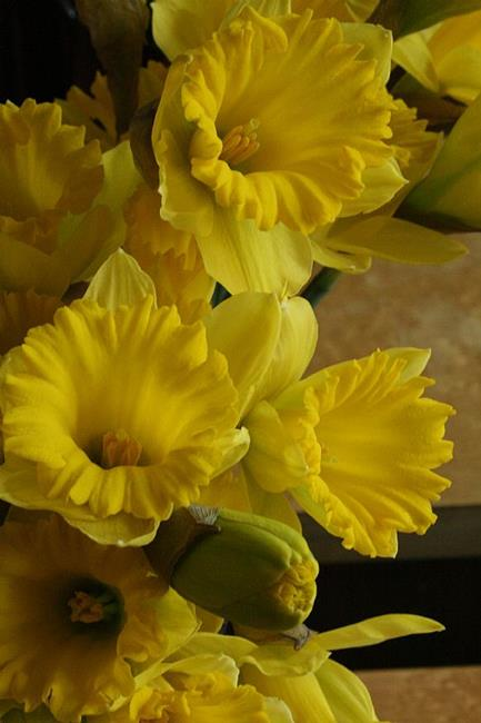 Art: Springtime in Yellow by Artist Ruth Edward Anderson