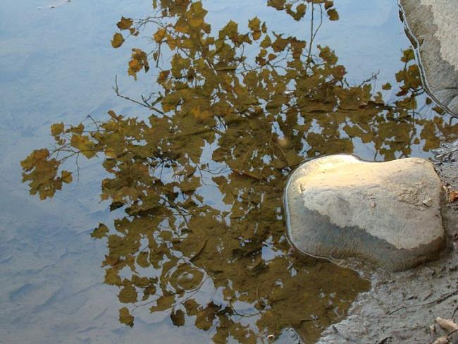 Art: Reflections in the Potomac by Artist Leea Baltes