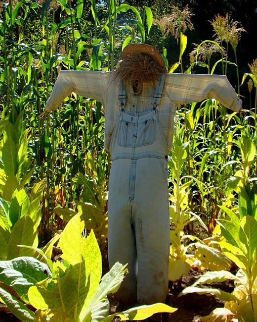 Art: Scarecrow At Work by Artist Leea Baltes