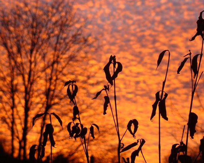 Art: Glorious Sunrise by Artist Leea Baltes