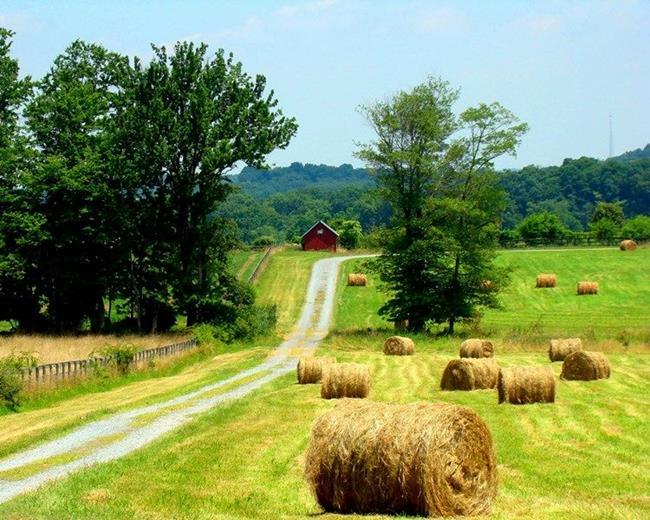 Art: Harvested Hay by Artist Leea Baltes