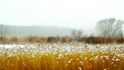 Art: winter prairie lr lrg .jpg by Artist Alma Lee