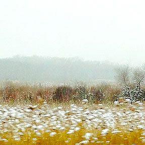 Detail Image for art winter prairie lr lrg .jpg