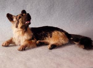 Detail Image for art Silk Furred German Shepherd Dog