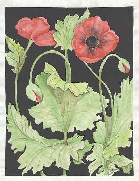 Art: poppies by Artist pamela jean lacasse