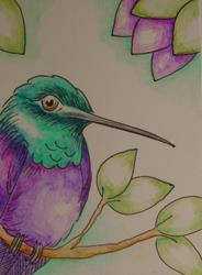 Art: VIOLET BELLIED HUMMINGBIRD IN MY GARGEN ACEO by Artist Cyra R. Cancel