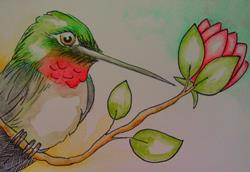 Art: RUBY HUMMINGBIRD WATERCOLOR & INK by Artist Cyra R. Cancel