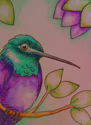 Art: VIOLET BELIIED HUMMINGBIRD WATERCOLOR & INK by Artist Cyra R. Cancel