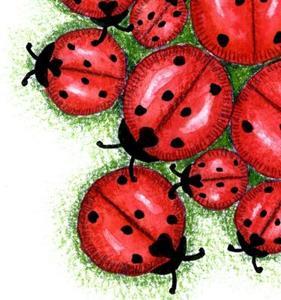 Detail Image for art Ladybug Cluster
