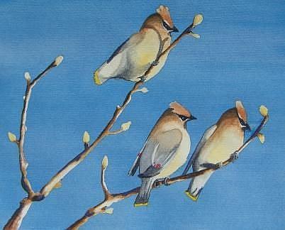 Art: Cedar Waxwings by Artist Vivian Maxey