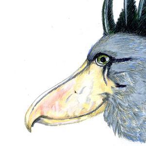 Detail Image for art Shoebill Stork