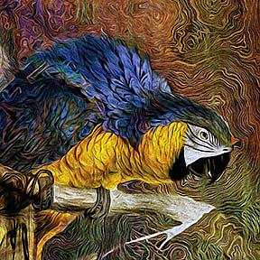 Detail Image for art Blue Macaw
