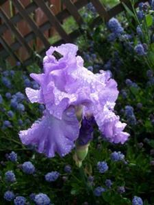 Detail Image for art Rhapsody in Purples