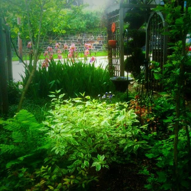 Art: Spring Garden by Artist Amie R Gillingham