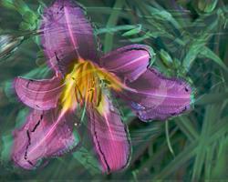 Art: Purple Lily Movement by Artist Carolyn Schiffhouer