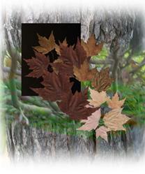 Art: Leaves a fall by Artist Carolyn Schiffhouer