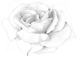 Art: Blossom by Artist Kris Jean