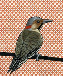 Art: Northern Flicker by Artist Cary Dunlap Daly