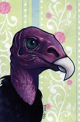 Art: Turkey Vulture Portrait by Artist Cary Dunlap Daly