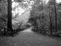 Art: The path  by Artist Diane G. Casey