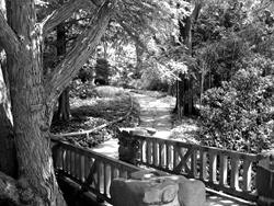 Art: The Bridge by Artist Diane G. Casey