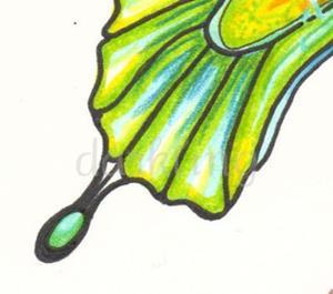 Detail Image for art Wet T Shirt Fairy