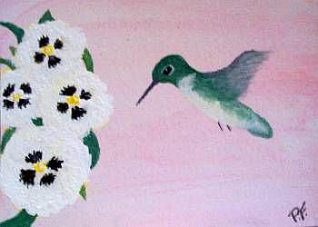 Art: humming bird and white panies flower by Artist POLLY FORD PAINTINGS