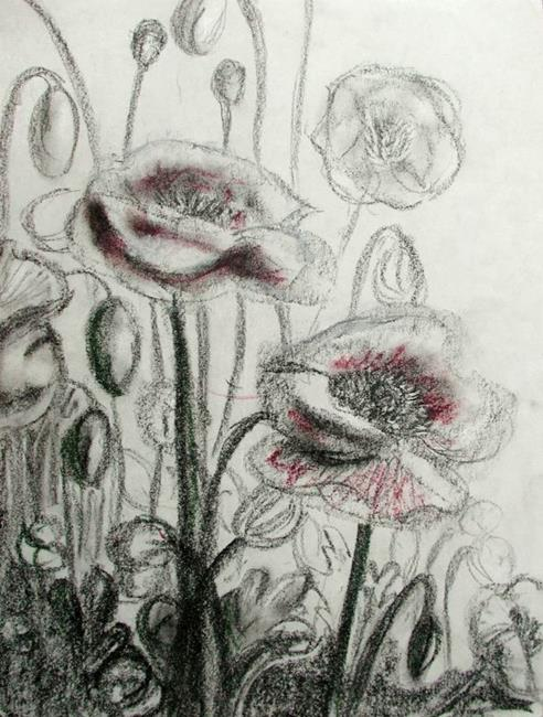 Art: unfinished poppies by Artist Shawn Marie Hardy