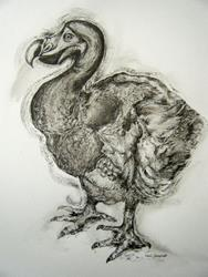 Art: The Dodo Drawing by Artist Chris Jeanguenat