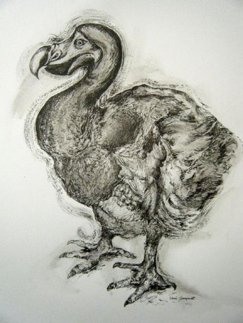 Art: The Dodo Drawing by Artist Chris Jeanguenat