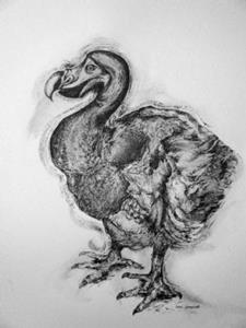Detail Image for art The Dodo Drawing