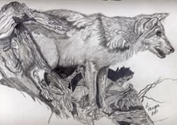 Art: Something of Interest - SOLD by Artist Lisa Morgan