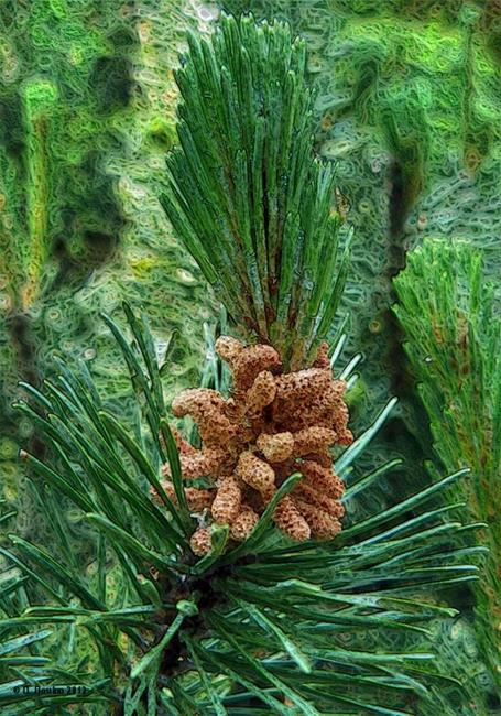 Art: Pine Cones or Flowers? by Artist Deanne Flouton