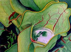 Art: Pitcher Plants by Artist Wendy L. Gonick