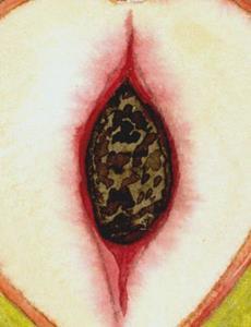 Detail Image for art Illuminated Peach (ATC)
