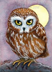 Art: Saw-Whet Owl ACEO by Artist Lisa M. Nelson