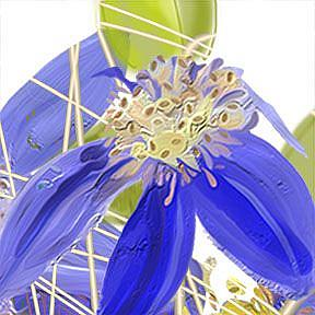 Detail Image for art Joe's Clematis