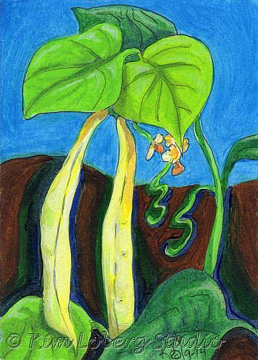 Art: Kentucky Wonder Wax Beans by Artist Kim Loberg
