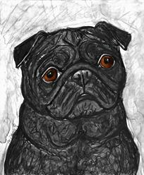Art: Black Pug 1 by Artist Melinda Dalke