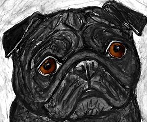 Detail Image for art black puga.jpg