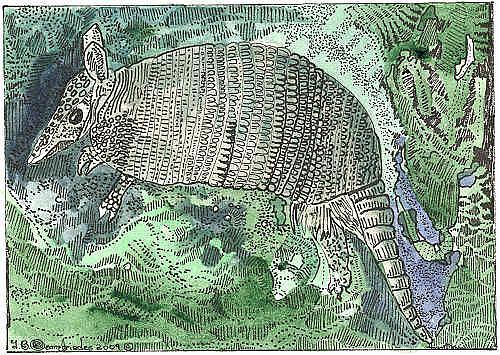 Art: Okefenokee Armadillo by Artist Theodora Demetriades