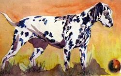 Art: Dalmation Dog, Watercolor by Artist Naquaiya