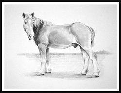 Art: Nate...  Belgian Draft Horse by Artist David Mott