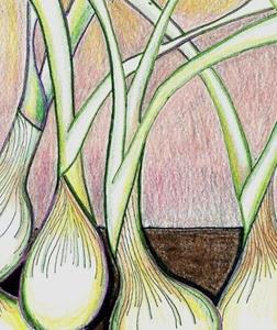 Detail Image for art Onions-A Rhythm Of Their Own