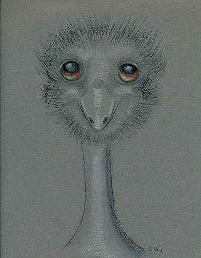 Art: I Emu-portrait of Henrietta by Artist Sherry Key