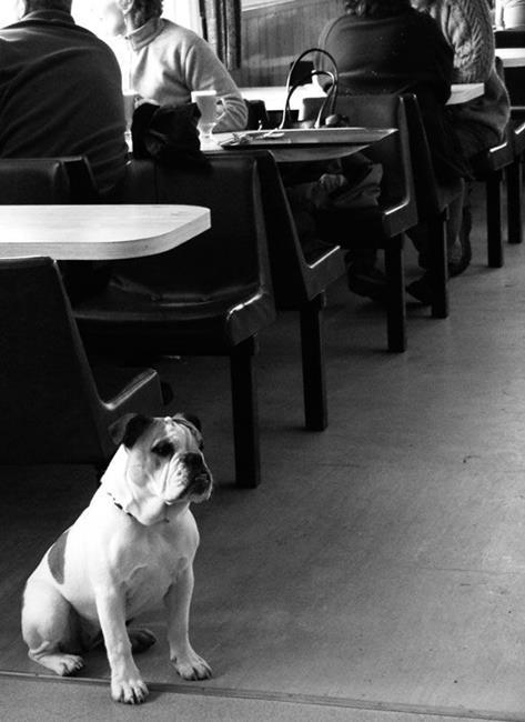 Art: Bulldog In Devon Seaside Café by Artist Laura T
