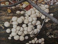 Art: Button Fungus by Artist Harlan